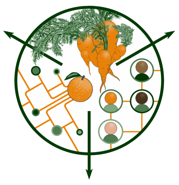 The logo for the Food Systems Coalition of Greater Gainesville, depicting carrots, a food system, and a social network